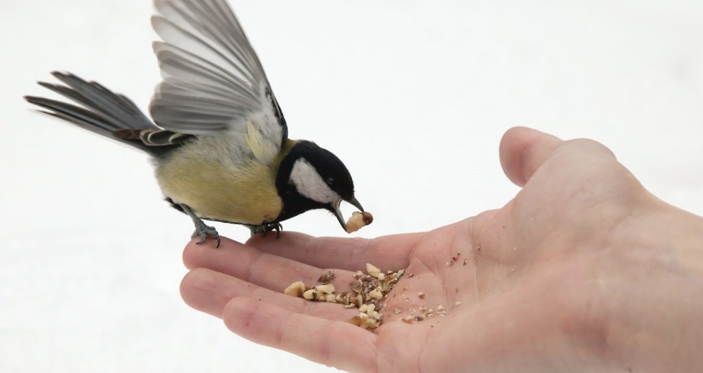 open hand and titmouse