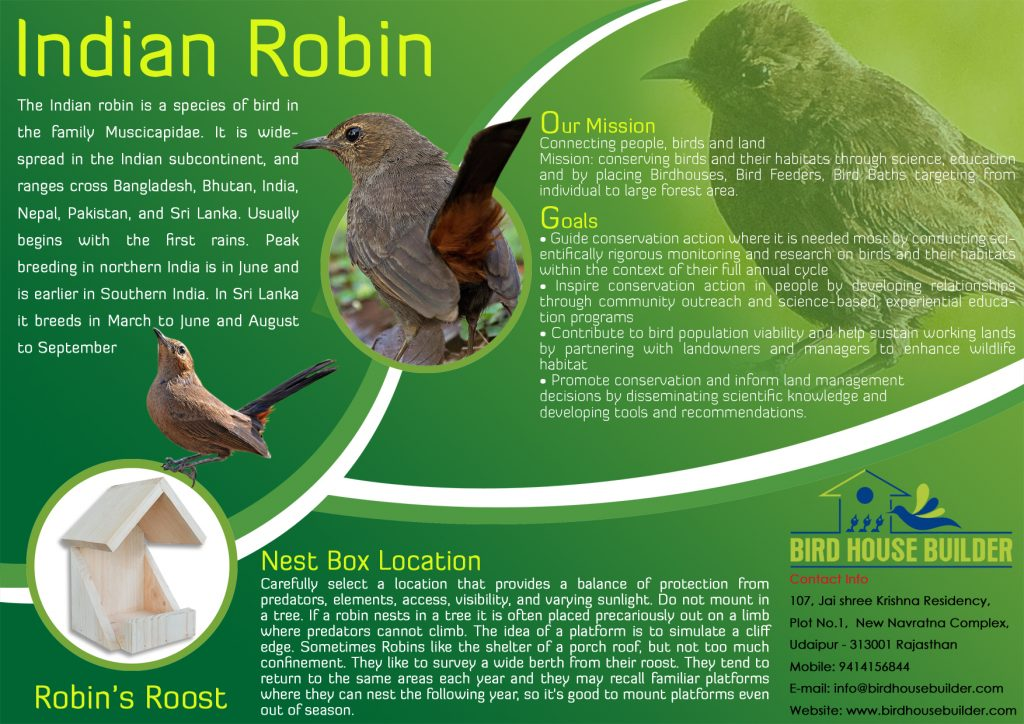 indian-robins